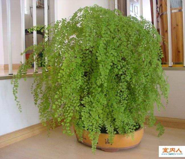 多年生木本植物横切面结构图