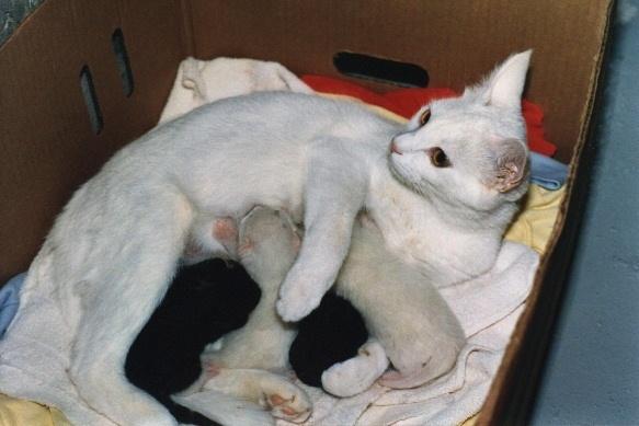 猫是一种胎生动物