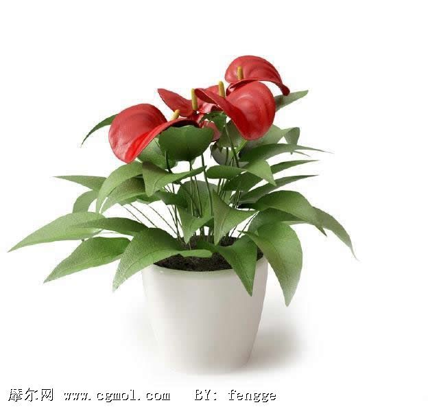 盆栽的种类很多,普通按盆栽观赏上的重点,可依树型,树数,树高,树种