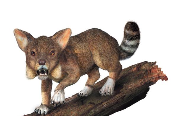 在距今大约5,000万年的新生代始新世,现代食肉动物的共同祖先开始出现